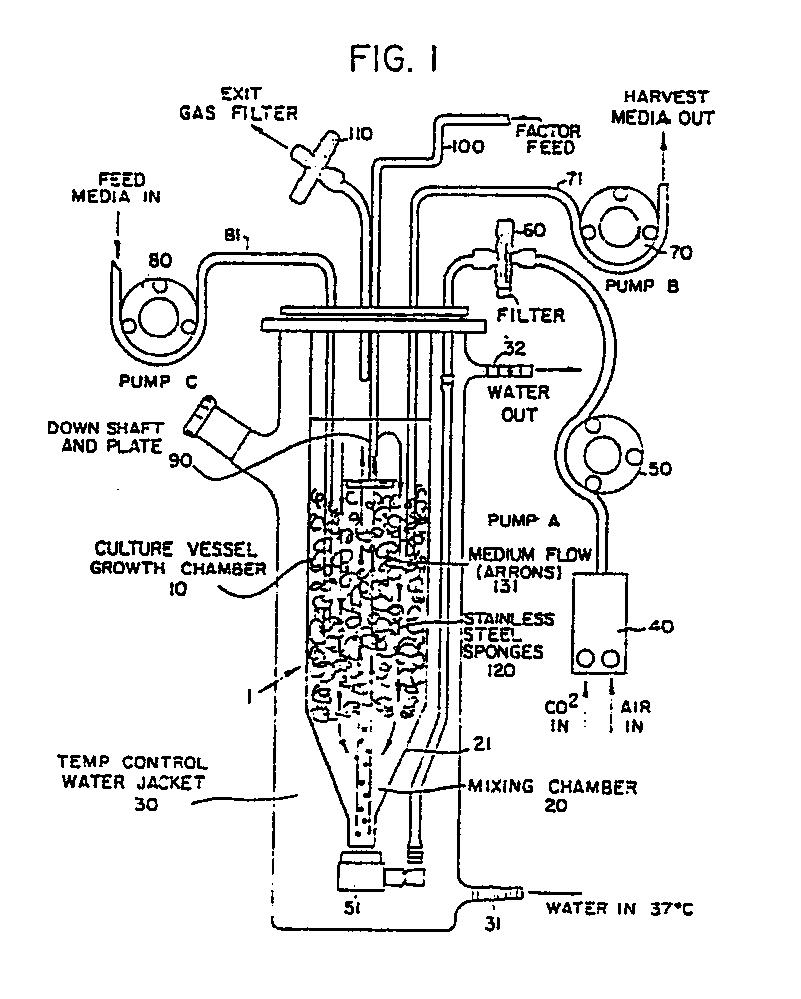 airlift fermentor