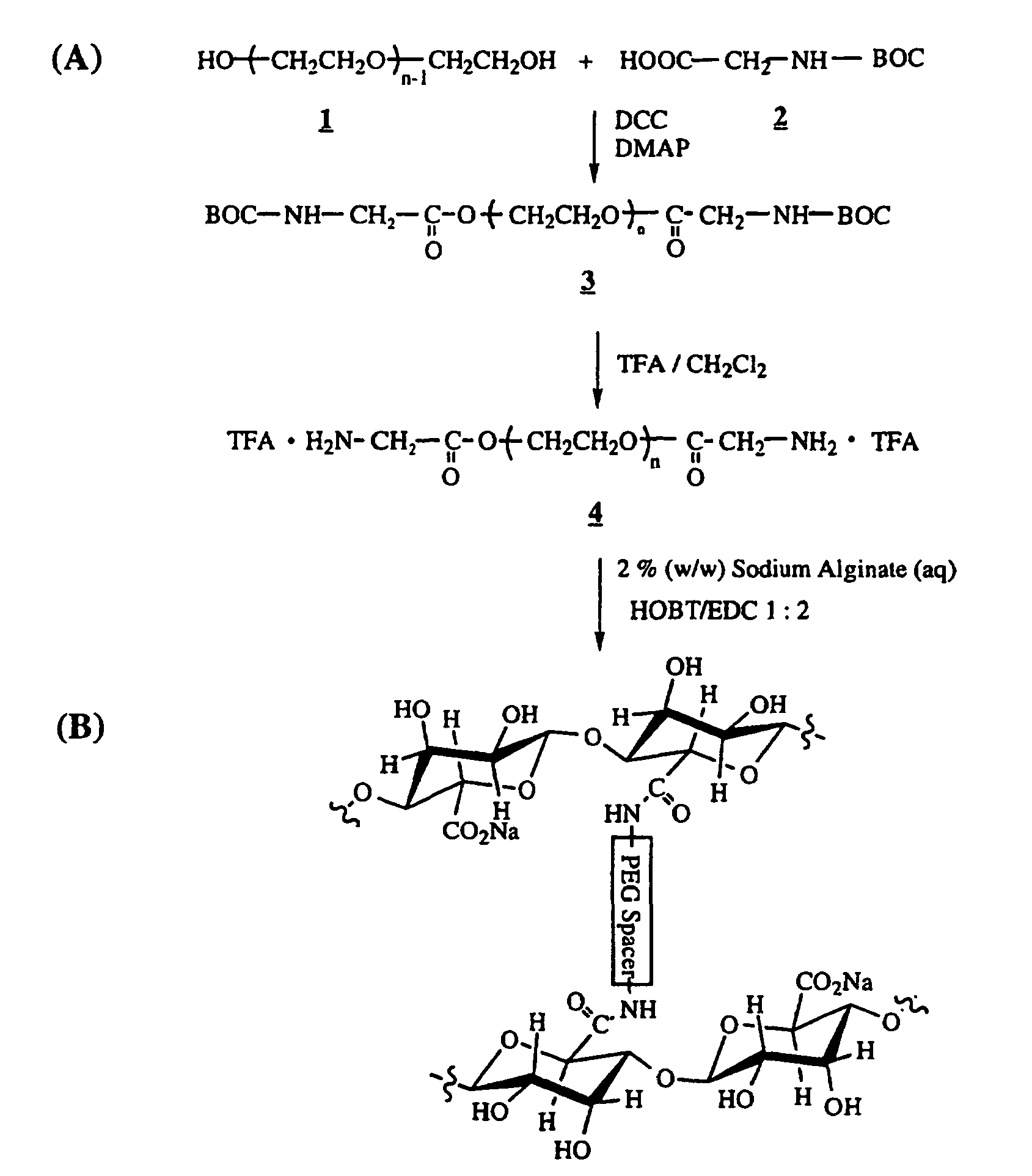 POLYMERS CONTAINING POLYSACCHARIDES SUCH AS ALGINATES OR