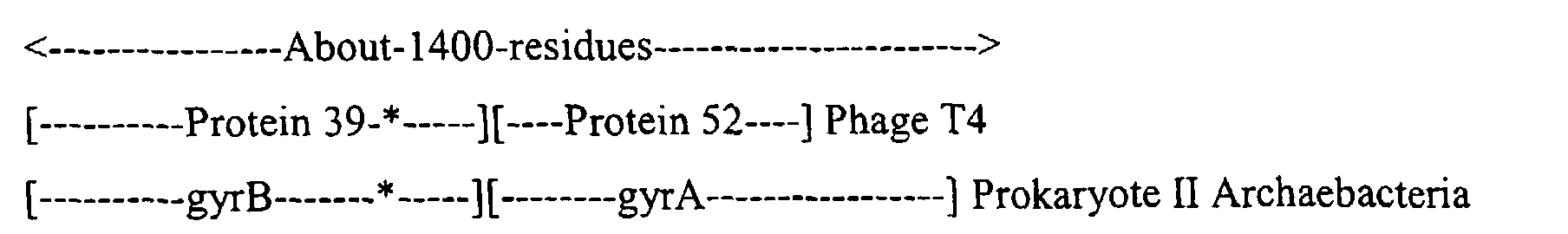 Sequence-determined DNA fragments and corresponding polypeptides