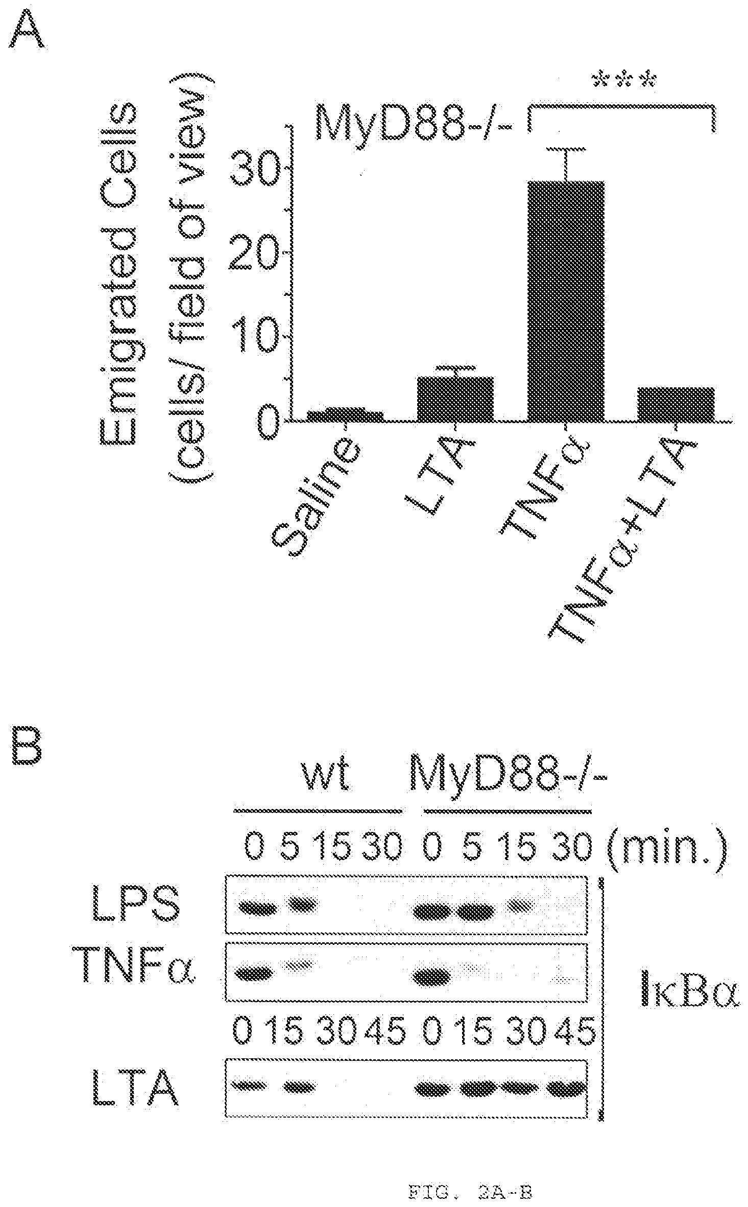 Chronische prostatitis y coli