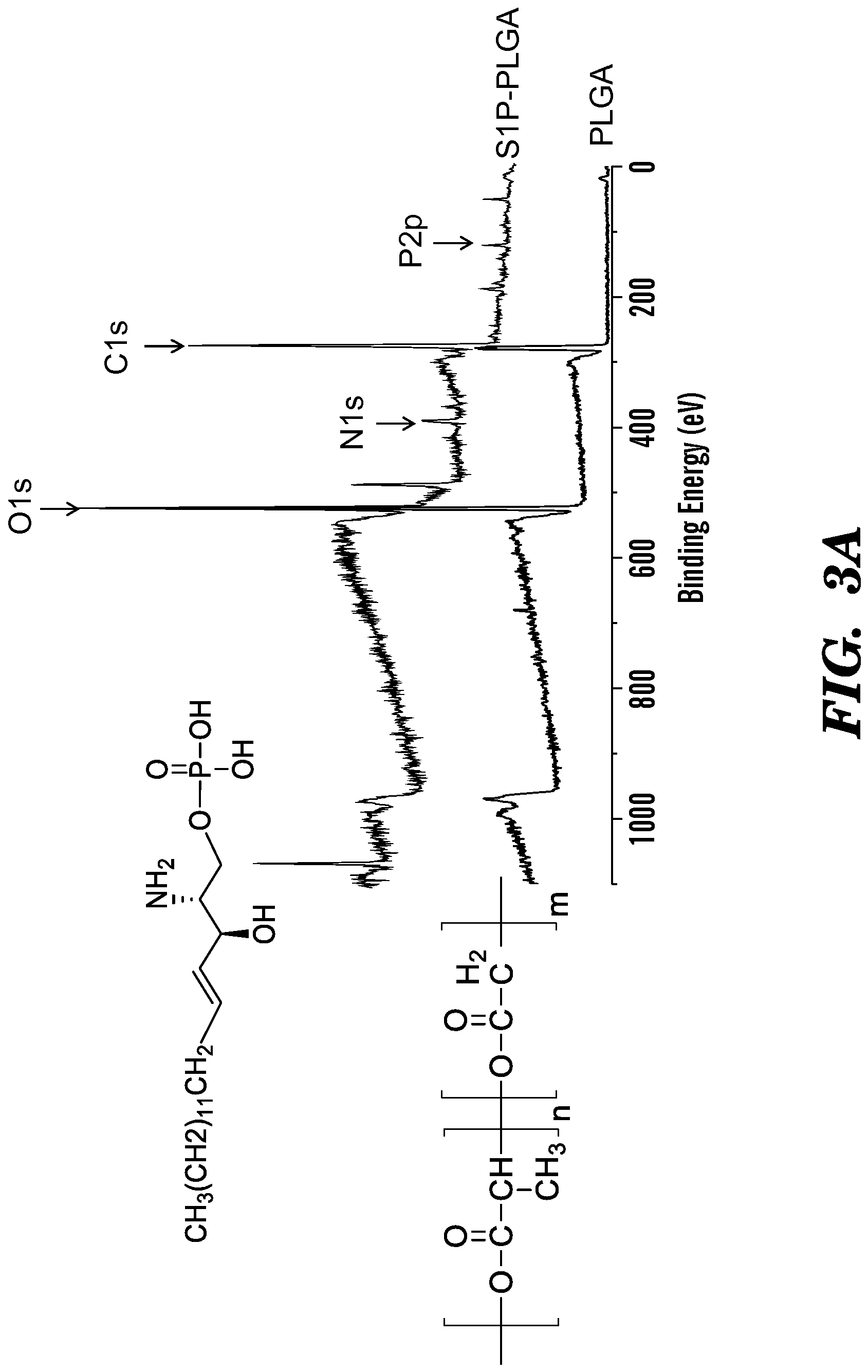 SYSTEMS AND METHOD FOR ENGINEERING MUSCLE TISSUE - Patent 2833930