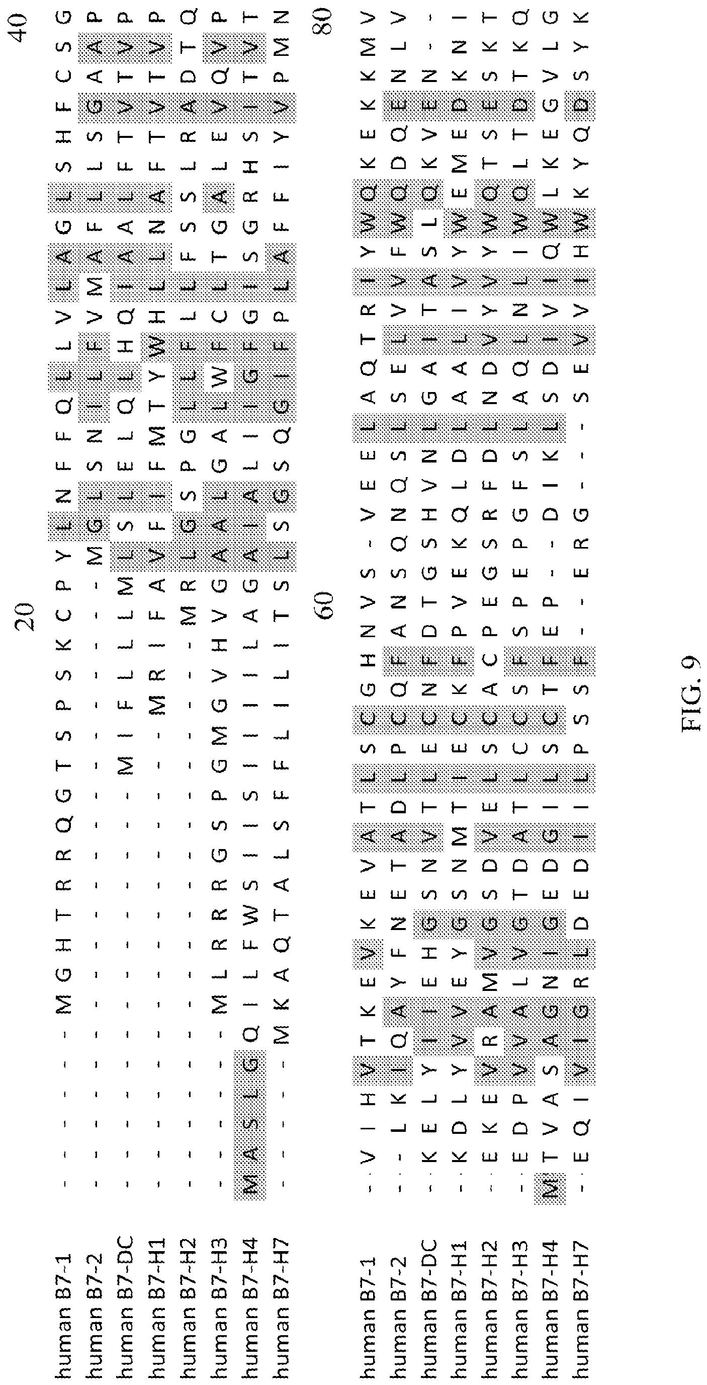 METHODS OF MODULATING IMMUNE FUNCTION WITH ANTI-B7-H7CR ANTIBODIES